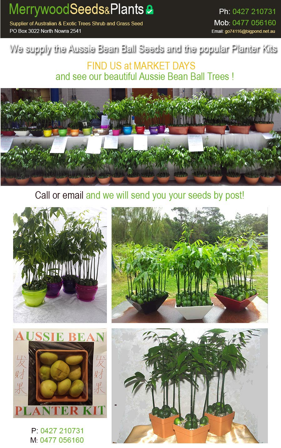 Merrywood Seeds and Plants